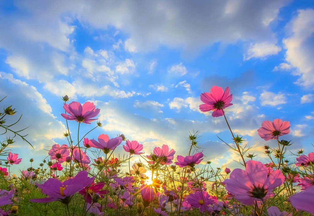 flowers-green-springtime-blue-yellow-sunlight-pink-white-sky-spring-sunbeams-beautiful-clouds-sunset-flower-desktop-hd